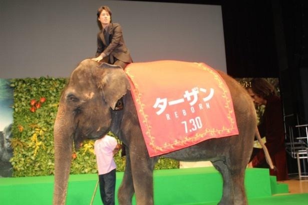 ゾウに乗って歩く桐谷健太