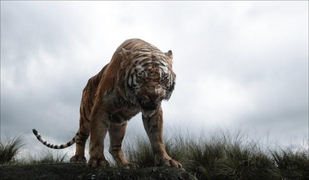 人間を憎むシア・カーンにより、モーグリはジャングルから追い出されることに…