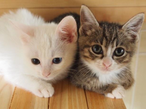 ふだん冷たい態度の「おうし座の猫さん」、8月だけはデレたりスリスリしてくれそう