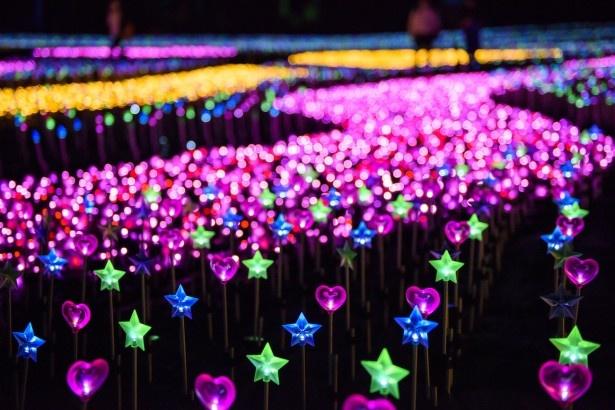 初登場の「天空の花畑」は、キュートなハートや星形の花々に釘付け!これらは周囲のイルミネーションが反射して光る仕組みだ