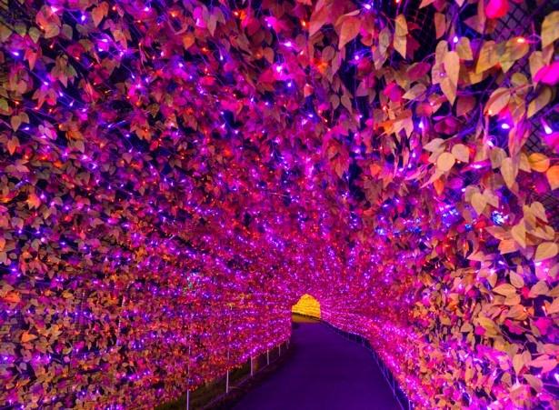 広大な敷地で行われるイルミネーションは、7色に輝く「虹龍(こうりゅう)の光の大トンネル」からスタート