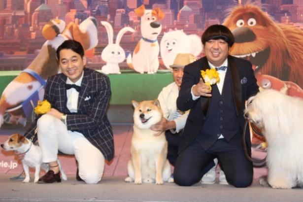 『ペット』でバナナマンが演じたイヌにそっくりな2匹が登場