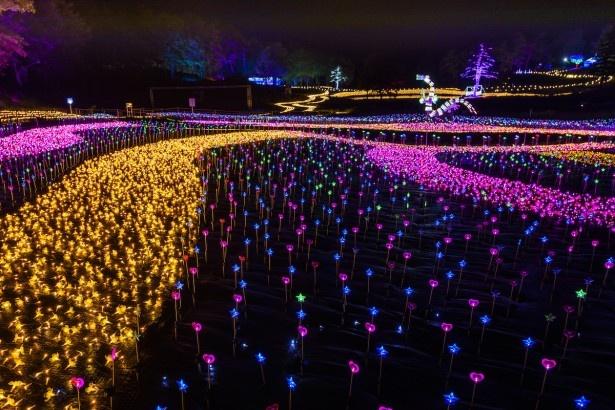 「誰もやったことがないものを作る」と丸々氏。無数の太陽光発電LEDを使用した今年初登場の「天空の花畑」もそのひとつ。奥の「幻想庭園」には世界初の有機ELによる龍のオブジェが