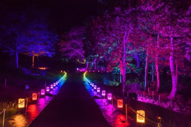 新エリアへ続く「龍魂ノ径(みち)」。行灯には時折光が変化する仕掛けが施され、写真にも幻想的な雰囲気がそのまま映し出されるようライティングされている