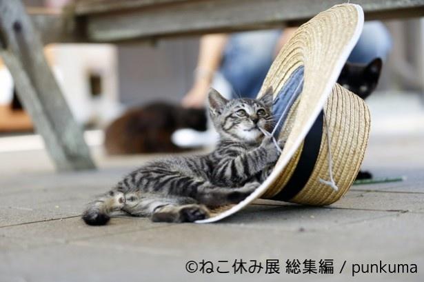 子猫はやっぱり鉄板の愛らしさだ