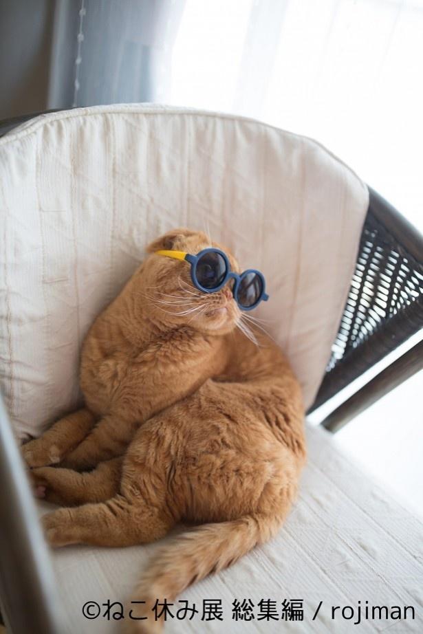 猫もバカンスするニャ!?