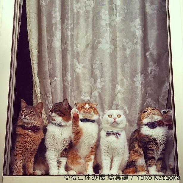 ネクタイもポーズもバッチリキメるおしゃれ猫たち