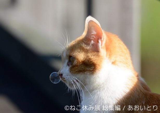 鼻提灯という貴重な瞬間(!?)で、オモシロ可愛さ無限大