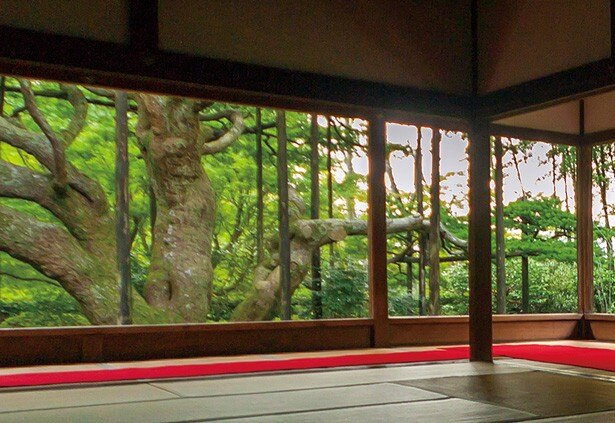 【写真を見る】樹齢約700年の見事な松は、京都指定の天然記念物/宝泉院