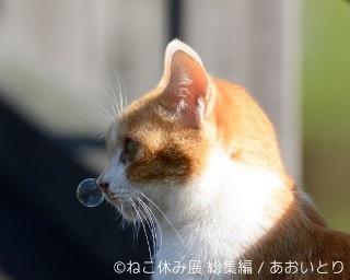 人気イベント「ねこ休み展 総集編」が8月3日(水)から17日(水)まで日本橋タカシマヤで開催!
