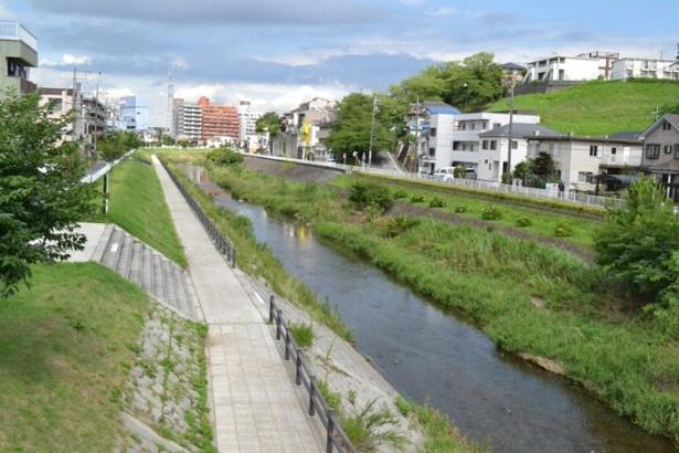聖蹟桜ヶ丘駅からも近い「大栗川」の川沿いには、遊歩道が整備されている