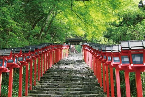 石段の両わきの朱色の春日灯籠と緑の木々とのコントラストが印象的な「参道石段」/貴船神社