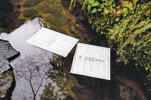 御神水に「おみくじ」(200円)を浮かべると、文字が現れる水占みくじも欠かせない/貴船神社