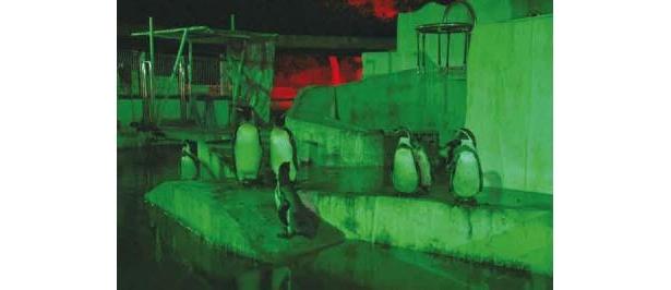 動物への負担軽減のため、照明は赤や緑に