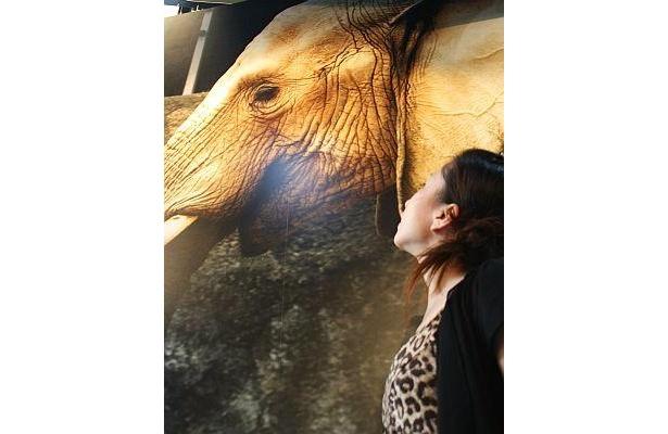 ゾウはやはり見上げるほどのビッグサイズ! その皮膚感までもがリアルに観察できるのは巨大な写真ならでは