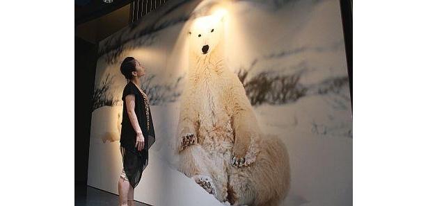 真っ白な雪景色の中にいるホッキョクグマの親子がじっとこちらを見つめている