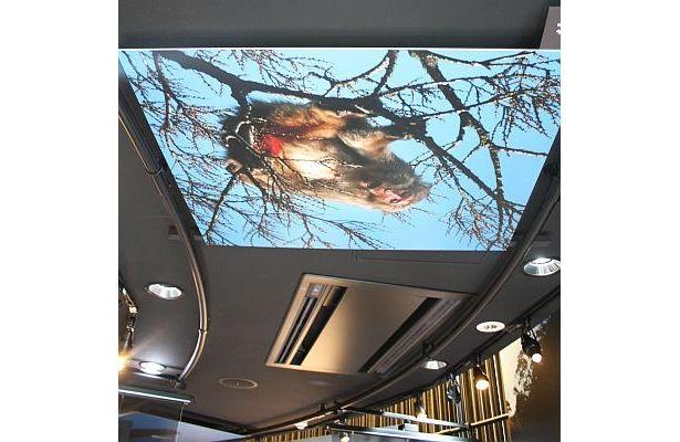天井にいるサル。スペースをフルに使った展示方法もおもしろい