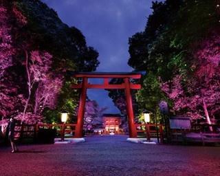 チームラボが京都のパワスポ、下鴨神社を初ライトアップ