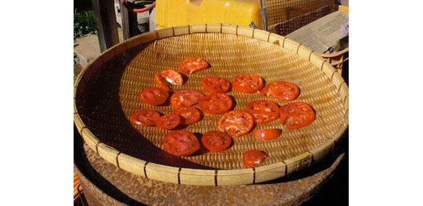 トマトピューレ用に干しているトマトスライス。おいしくな〜れ。家のベランダでも、大丈夫ですよ