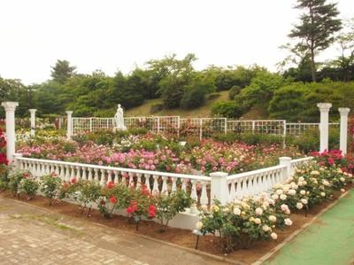 生田緑地とばら苑を巡るコースでは、秋の花々を愛でよう