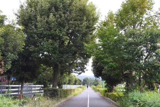 自転車と歩行者の道が中央線で仕切られている(「下河原緑道」)