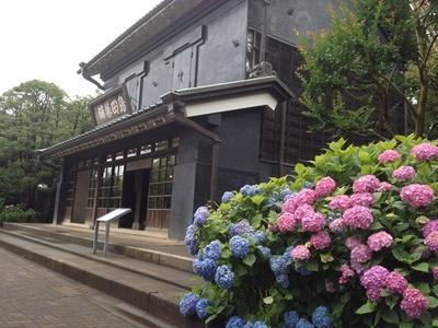 5月下旬~7月上旬には、約30種1万株ものあじさいが園内を彩る(「郷土の森博物館」)