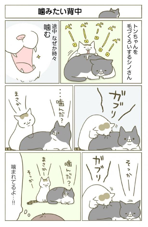 2匹のネコ、トンちゃんとシノさんのかわいい仕草に癒される「アメブロ猫ランキング」第1位の大人気猫マンガの連載が、レタスクラブでも始まりました。