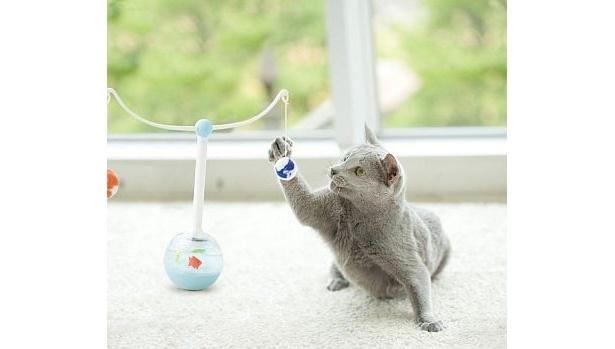 思わず猫パンチ!