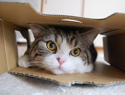 """ちょっぴりドジでキュートな猫""""まる""""の姿に癒されて!"""