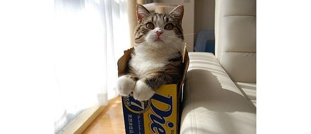ビールの箱に入ってご満悦