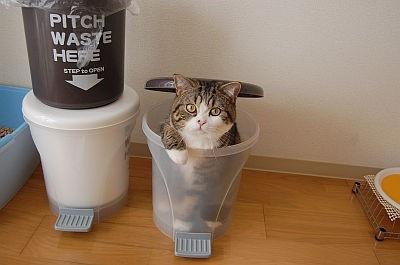 ゴミ箱にも入ります