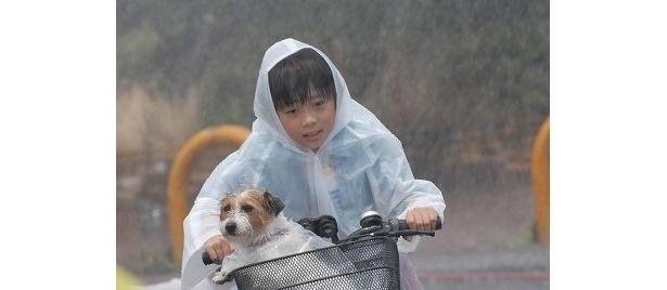 雨ニモマケズ、お母さんのところへ!