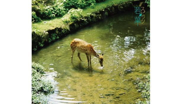 ニューシングル「若葉」は映画「櫻の園」主題歌!