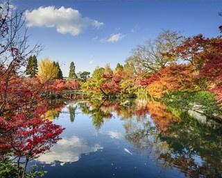 紅葉の名所の美しさに感動!5分で知る永観堂の見どころ