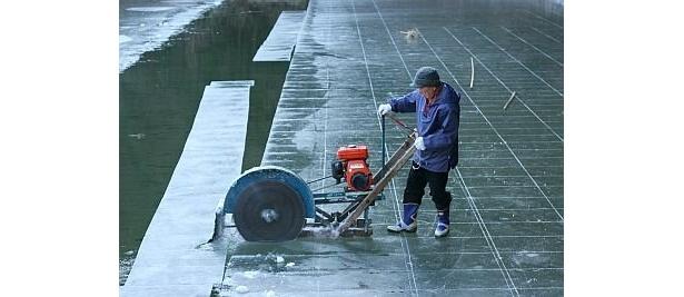 """おいしい""""天然氷""""ができるまで 【1】池一面に張った氷を切り出す"""