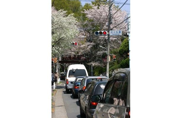 お盆だけでなく桜のシーズンも渋滞はつきもの