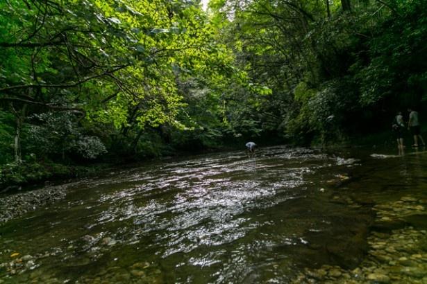 滝周辺には穏やかな流れの場所もある