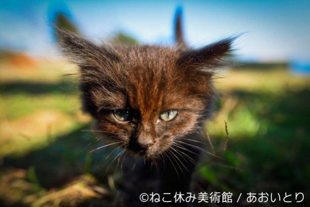 『猫だって鼻提灯くらいできるもん。』で話題を集めた、写真家「あおいとり」氏の作品も堪能できる!
