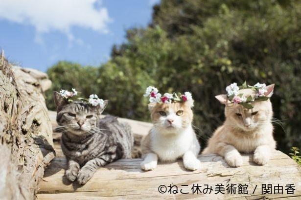 『アイドル猫のつくりかた』で知られるネコ写真家の作品は、さすがの愛らしさ