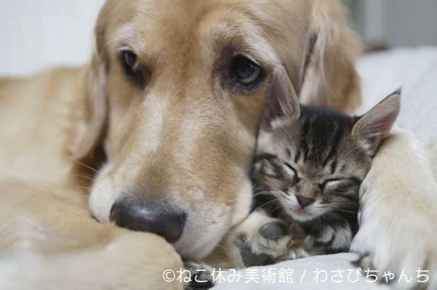 保護ネコ「わさびちゃん」の幸せだった姿を見られるだけで、心底ほっこりできる