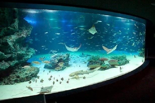 【写真を見る】2位の「サンシャイン水族館」
