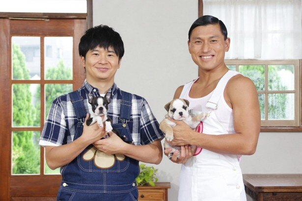 【写真を見る】オードリーが動物と触れ合う「―どうぶつピース!!」では、ネコやイヌの赤ちゃんなど癒やしの映像を紹介