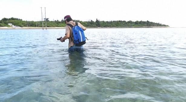 市橋達也受刑者が離島に渡った時と同様に海を歩いて渡る番組ディレクター