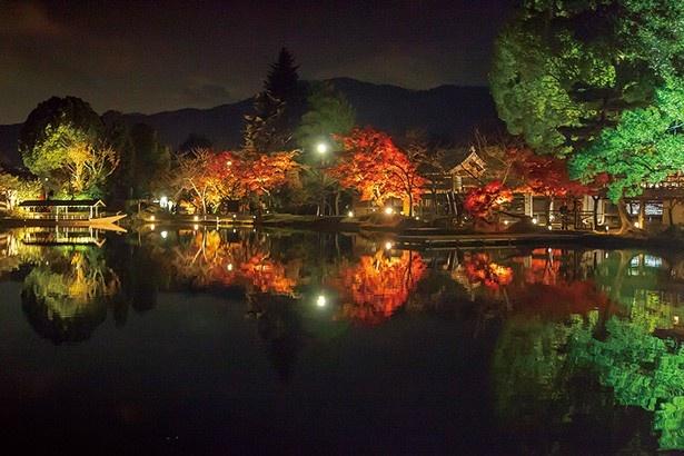 毎年紅葉の時季にライトアップ。大沢池が一枚の絵のような美しさに