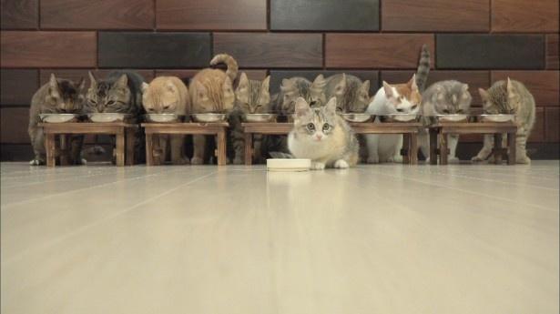 【写真を見る】猫好きに大人気の10匹の猫たち