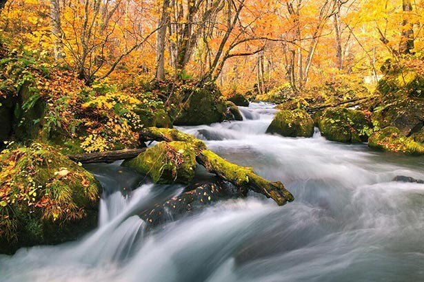ランキング2位・青森県十和田市の「奥入瀬渓流」 森林と水の音も楽しめる紅葉スポット
