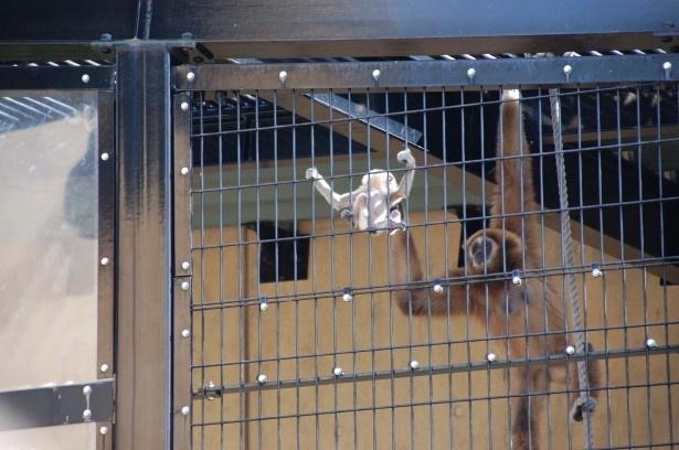柵をつかむ赤ちゃんと見守るモンロー
