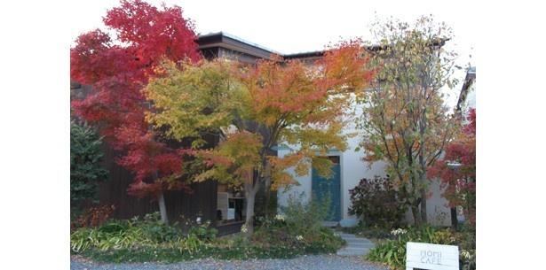 木々や花に包まれた一軒家。秋には庭の紅葉が美しい/MOMI CAFE