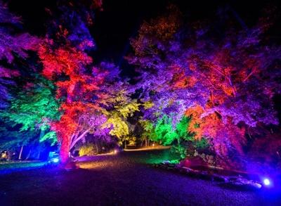 庭園の魅力を最大限に引き出す雲仙市三十路苑「光の極彩庭園ライトアップ」。幻想的かつ、どこか叙情的な光の世界を演出する