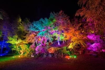 庭園内の随所にLEDフルカラー投光器やプロジェクターが設置されている